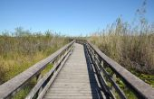 Observation Trail In The Everglades, Florida