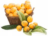 pic of loquat  - fresh loquats in basket and branch with leaves and fruits isolated on white - JPG