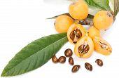 Loquat Fruit (eriobotrya Japonica L.)