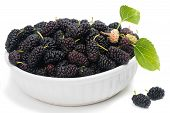 Ripe Mulberries In Bowl