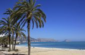 Palms and sandy Beach Costa Blanca Spain