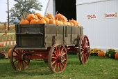 Trailor Full Of Pumpkins