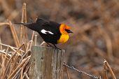 Blackbird On Perch