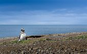 Penguin And The Sea