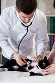 Veterinary Caring Of A Cat