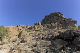 stock photo of magma  - Cacti and other desert succulent plants near Magma ridge in Boyce Thompson Arboretum State Park near city of Superior AZ - JPG