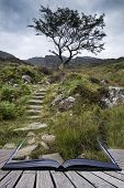 Solitary Tree On Mountain And Footpath Landscape In Summer Conceptual Book Image