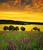 Spring flowering meadow at sunset