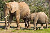 Mom And Baby Elephants