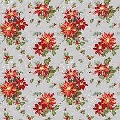 Christmas Seamless Background - Poinsettia in Watercolor - in vector