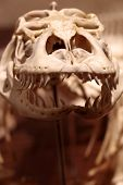 Dragon reptile skeleton 5
