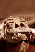 Dragon reptile skeleton 4