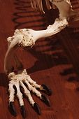 Dragon reptile skeleton foot