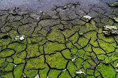 Cracked dead soil