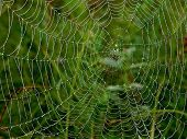 pic of spider web  - Morning Dew on a spider web - JPG