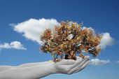Concept or conceptual human man or woman hand holding a brown autumn tree and blue sky with clouds ecology background