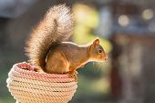 Squirrel rope