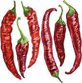 set of chili pepper