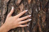 Hands&bark-1