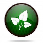 leaf green internet icon