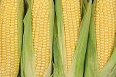 Corn Cobs