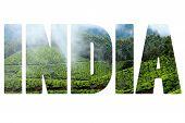 Landscape Of Green Tea Plantations. Munnar, Kerala, India