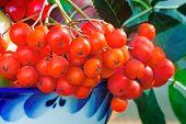 Rowan Berries In A Beautiful Ceramic Vase.