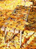 Fallen Yellow Maple Leaves On Garden Bench