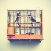Canaries in the cage on the house wall. Instagram style filtred image