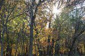 Sun through the tree tops