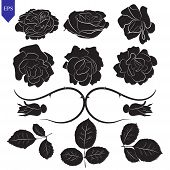 Set Of Different Flower And Leaves Of Roses Vector