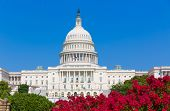 stock photo of capitol building  - Capitol building Washington DC pink flowers garden USA congress US - JPG