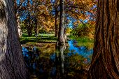 pic of guadalupe  - Reflections of Beautiful Fall Foliage of Huge Bald Cypress Trees On The Guadalupe River - JPG