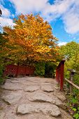 stock photo of royal botanic gardens  - Autumn tree and red wooden bridge with stone laid pathway at the Chinese garden - JPG