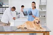 picture of coworkers  - Veterinarian coworker examining dogs x - JPG