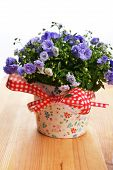 picture of flower pots  - blue campanula flowers in flower pot on wooden background - JPG