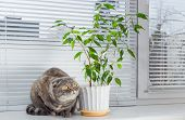 foto of scottish-fold  - Sad cat on the windowsill. She is bored.