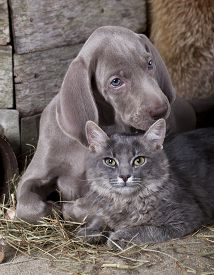 foto of coon dog  - puppy and kitten  - JPG