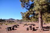 picture of recreation  - Picnic Recreational Area in Gran Canaria Canary Islands - JPG