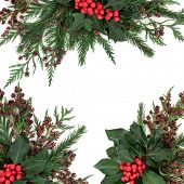 picture of ivy  - Winter and christmas floral border with holly and red berries - JPG