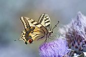 image of butterfly  - Close up butterfly - JPG