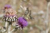 pic of butterfly  - Close up butterfly - JPG