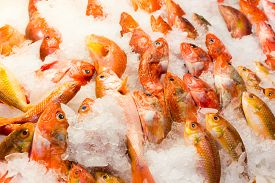 picture of red snapper  - Red snapper fish in wet market - JPG