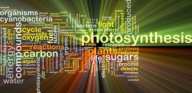 stock photo of photosynthesis  - Background concept wordcloud illustration of photosynthesis glowing light - JPG