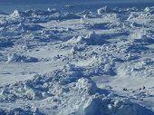 Picture Antarctic12 077