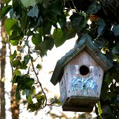 Painted Bird House