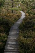 Wooden Walkaway Leading Into The Swamp