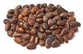Handful Of Nuts Of Siberian Cedar