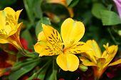 Beautiful Iris Fowers