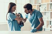 Smiling Professional Veterinarian Holding Cute Cat. Female Doctor Veterinarian Is Holding Cute White poster